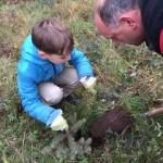 Beim Anpflanzen der Tannenbäume