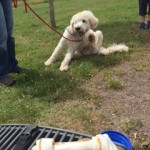 Ben vor seinem Sommerferien-Hundeknochen